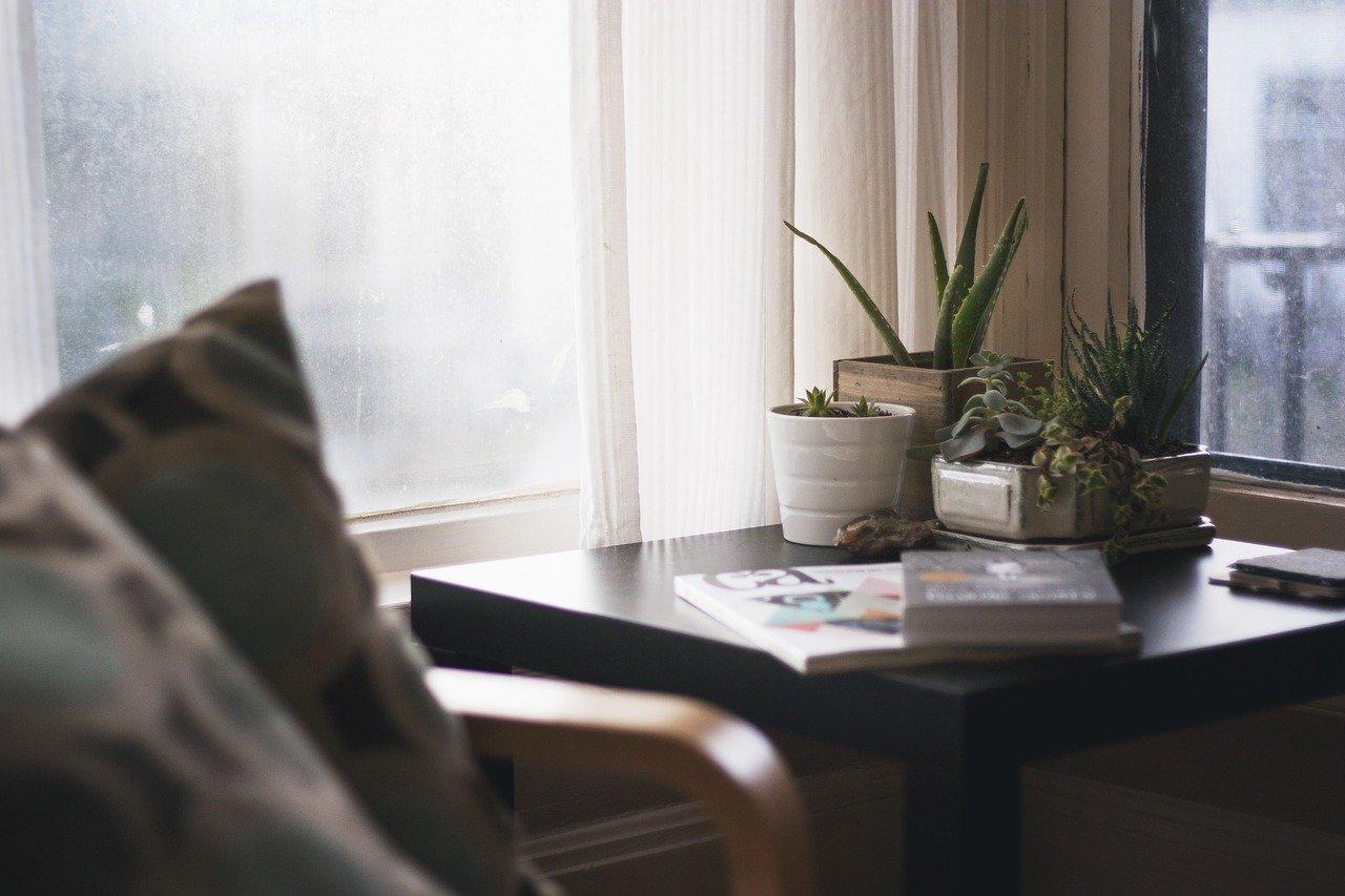Dlaczego rośliny w domu są ważne?